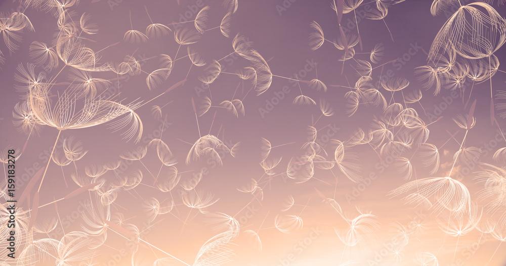 Fototapety, obrazy: 3d rendering of dandelion blowing silhouette. Flying blow dandel