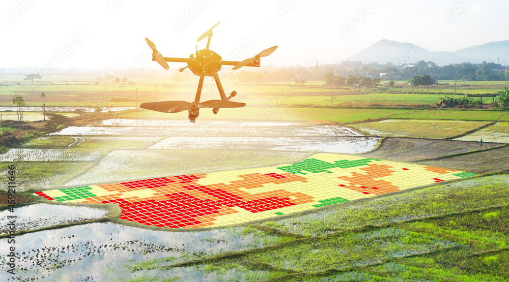 Fototapety, obrazy: Smart agriculture , farm , precision farming concept. Drone and NIR images application screen used to create field health maps for normalize difference vegetation index in field rice with flare light.