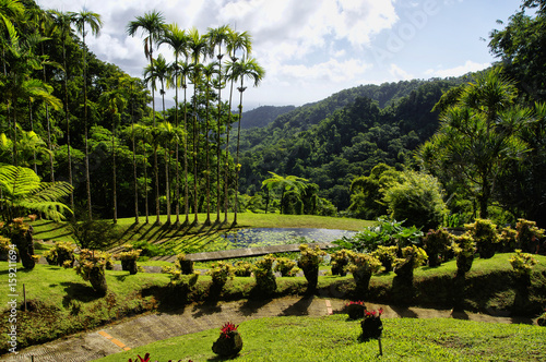 France, Martinique, the tropical  garden of Balata, Lesser Antilles Wallpaper Mural