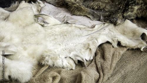 Fototapety, obrazy: Natural goat skin