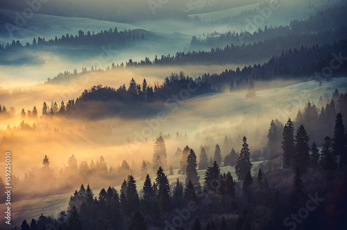 Foto op Aluminium Ochtendstond met mist Misty mountain forest landscape in the morning, Poland