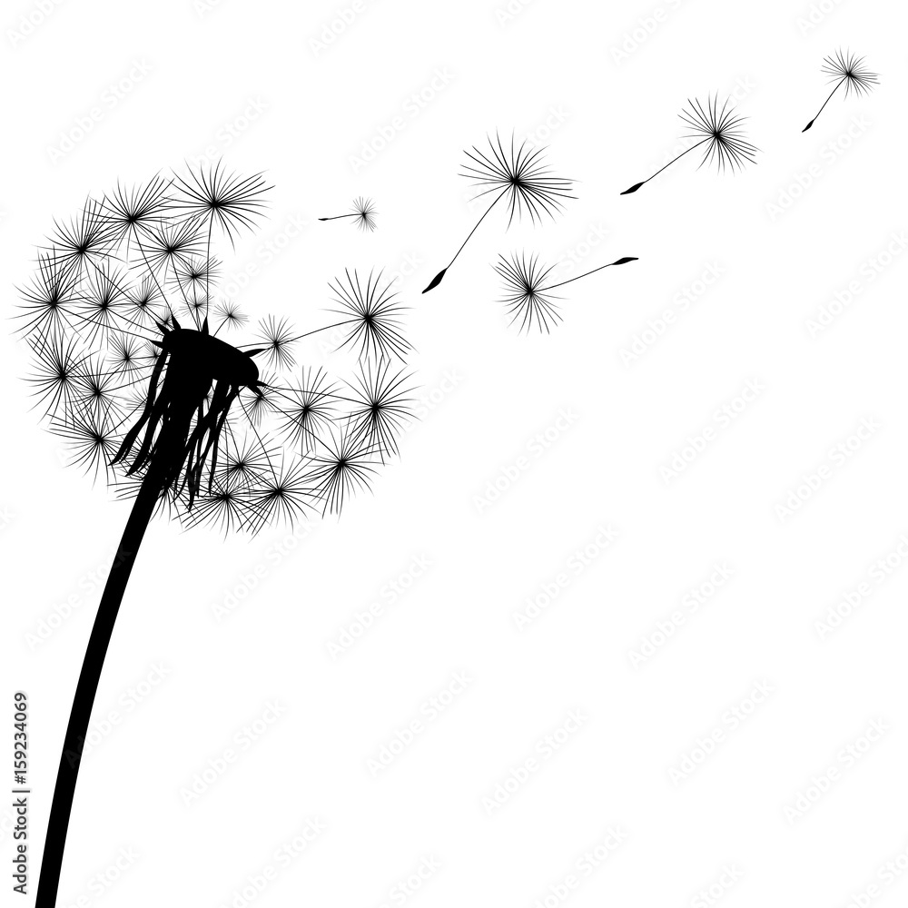 Fototapety, obrazy: black silhouette of a dandelion