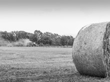 Tractor Baling Hay And Hay Roll In Black And White:  Tractor Bailing Hay And Hay Roll In An Open Field In Black And White.