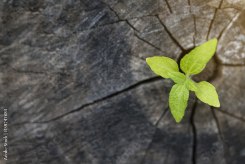 Photo  Plant growing on wood in springtime