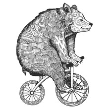 Bear On Bicycle Engraving Styl...