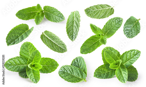Poster Condiments Mint leaves isolated on white background.