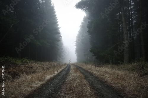 Obraz na plátně  Moody Foggy Landscape