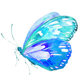 Fototapeta Buterfly - beautiful blue butterfly,watercolor,isolated on a white