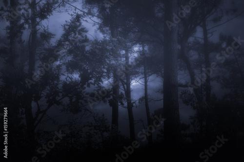 Keuken foto achterwand Begraafplaats Foggy and dark wooids