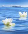 fleurs blanches de lotus sur mer d'huile en Thaïlande