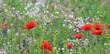 wildflower meadow with corn poppies