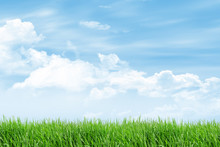 Grass Field With Blue Sky