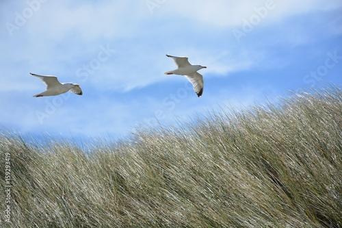 Seemöwen am Strand