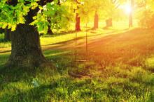 A Swing On A Tree In A Village...