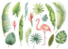 Watercolor Set Tropical Leaves...
