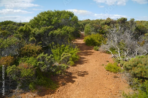 Photo  Landscape in Tasmania
