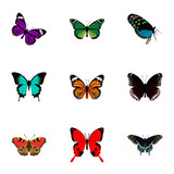 Realistic Birdwing, Sangaris, Monarch And Other Vector Elements. Set Of Beauty Realistic Symbols Also Includes Julia, Bluewing, Green Objects.