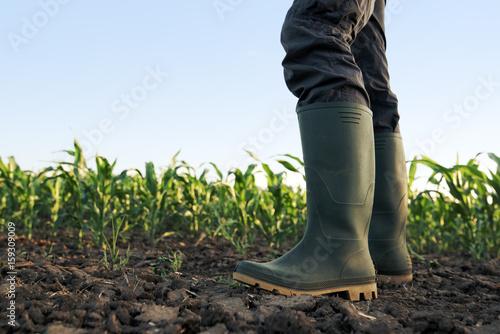 Fotomural  Farmer in rubber boots standing in corn field