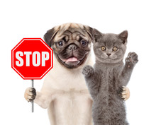 """Cat And Dog With The """"stop"""" Si..."""