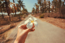 Exotic Flower In The Hand Of A...