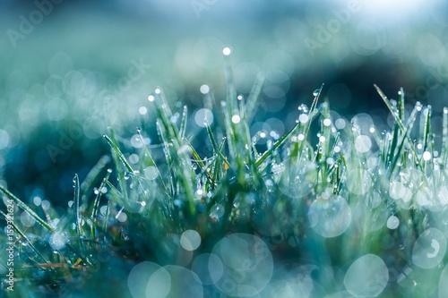 Obraz Wet grass with morning dew macro - fototapety do salonu