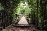 Fototapeta Bamboo - wood