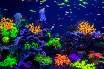 Fototapeta na wymiar Tropical fish with corals and algae in blue water. Beautiful background of the underwater world