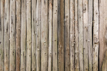 Background Fence Of Wooden Sprute Sticks