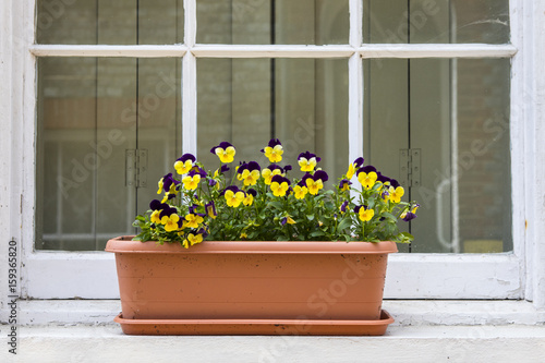 Fotobehang Pansies Pansies on a Window Sill