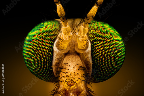 Türaufkleber Makrofotografie Extreme macro - full frontal portrait of a green eyed crane fly, magnified through a microscope objective (width of the frame is 2mm)