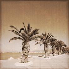Palmiers En Bord De Mer (Sitia...