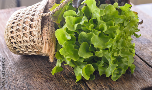 Fototapeta green oak lettuce on wooden background obraz
