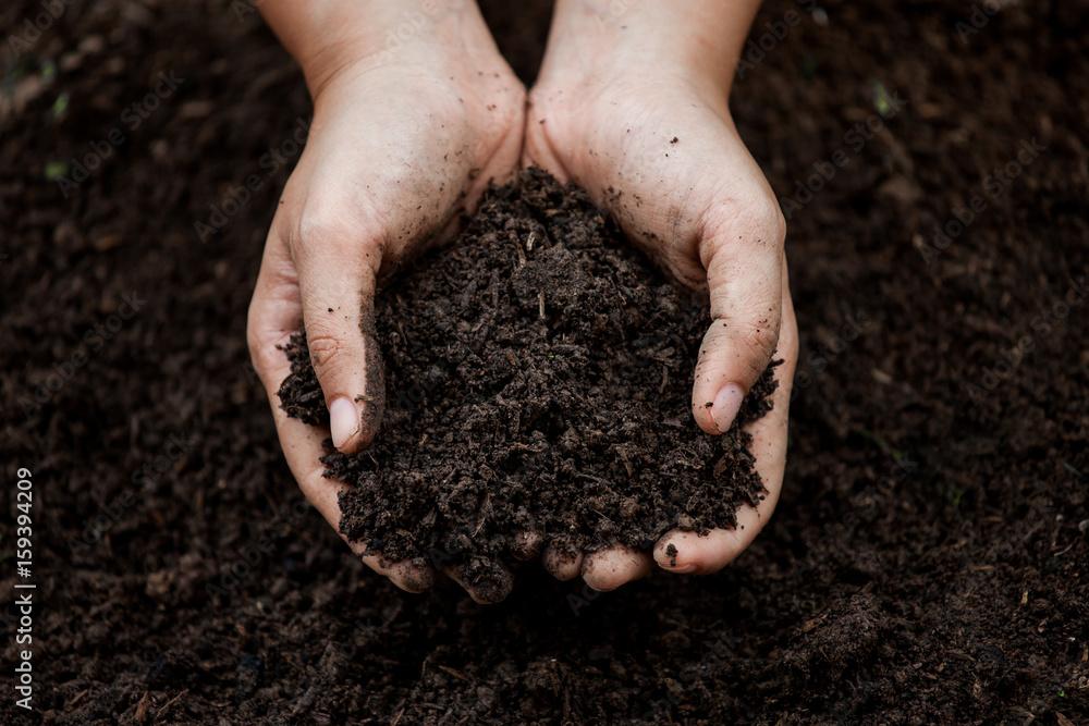 Fototapeta Soil in hand for planting