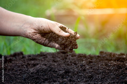 Soil in hand for planting Canvas
