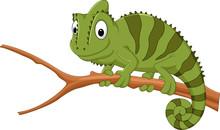 Cartoon Chameleon On A Branch