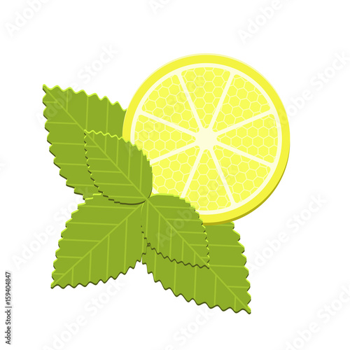 Valokuva  Vector mint and lemon