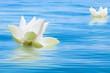 fleurs de lotus sur mer calme