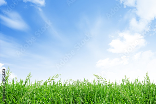 Foto op Plexiglas Blauwe hemel isolate grass field on white background with blue sky and cloud