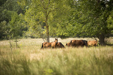 Landscape Photo Of Wild Horses In Letea Forest