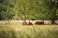 Landscape Photo Of Wild Horses...