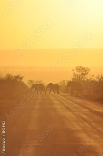 Poster Jaune sunset