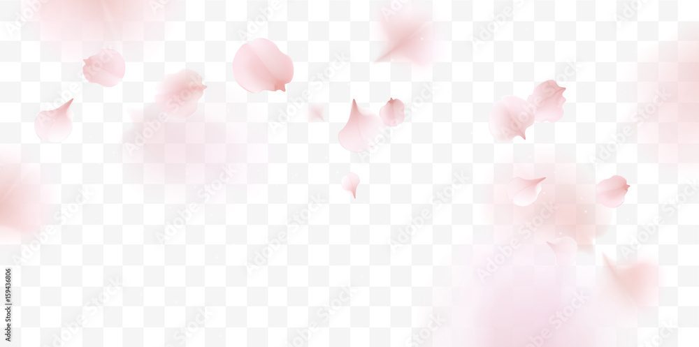 Fototapeta Pink sakura petals falling background