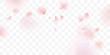 Pink sakura petals falling background
