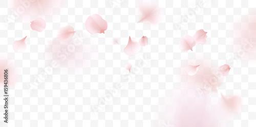 Pink sakura petals falling background - 159436806