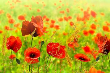 Obraz na Szkle Maki sommerwiese mit mohnblumen und gras