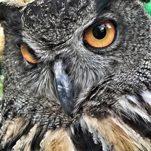 Deurstickers Uil owl