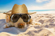 canvas print picture - dog retired at the beach