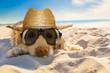 Leinwandbild Motiv dog retired at the beach