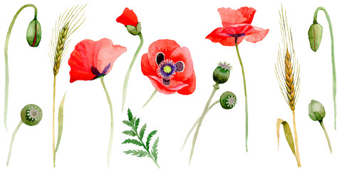 Panel Szklany Wildflower poppy flower in a watercolor style isolated.