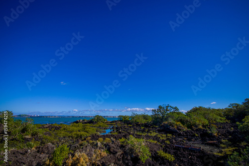 Foto op Plexiglas Donkerblauw Beautiful landscape in volcanic Rangitoto island in Auckland, in a sunny day with a beautiful blue sky